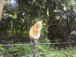鶴岡八幡宮の猫