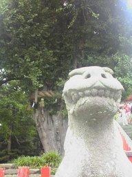 鶴岡八幡宮の狛犬さん(吽形)
