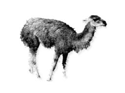 オライリー風グアナコの図(白)